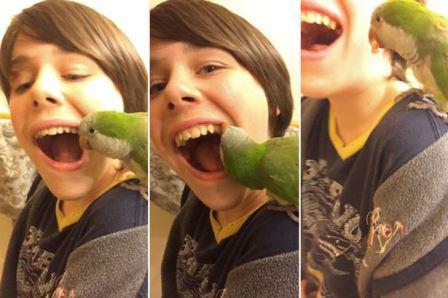 Домашний попугай помогает мальчику вырвать шатающийся зуб