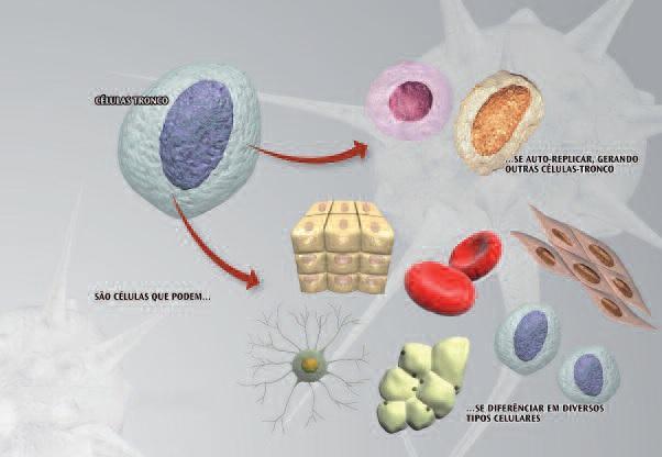 Стволовые клетки в имплантологии