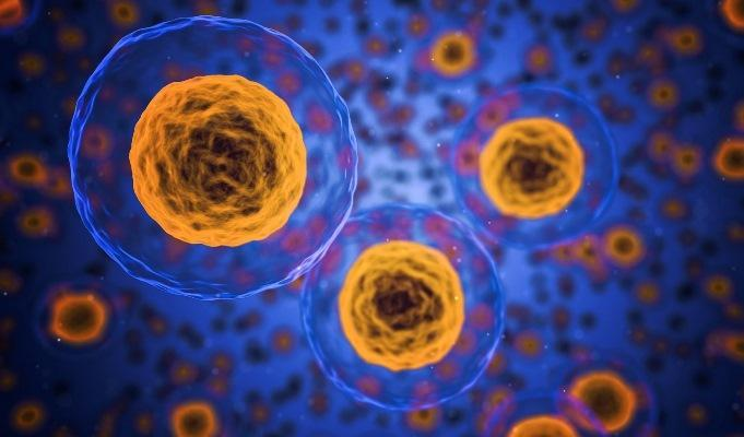 Стволовые клетки из тканей зуба могут применяться для генерации клеток молочных желез и молочных протоков