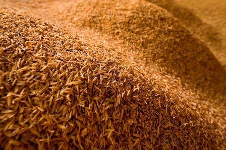 Малазийские ученые используют пищевые отходы для производства композитов