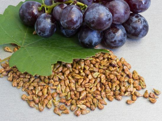 Вещества в составе виноградных косточек могут продлить срок службы пломбы