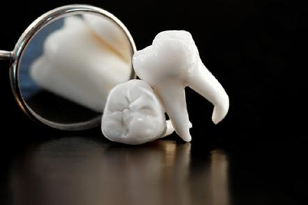 Учёные ещё на шаг ближе к выращиванию зуба in situ