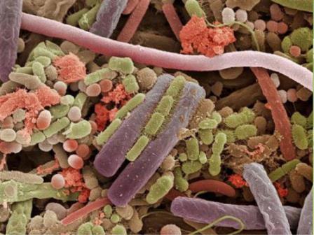 Бактерии в полости рта являются специфичными для каждого индивида