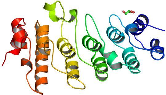 Обнаружен протеин, ответственный за патологию ВНЧС