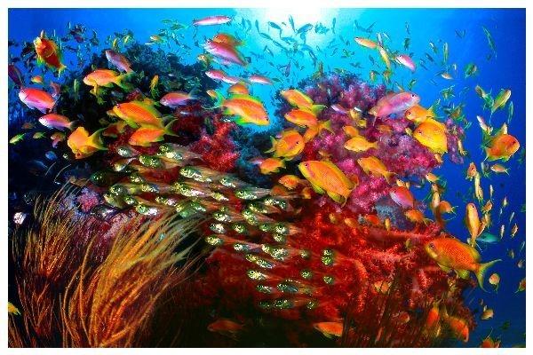Справиться с кариесом поможет энзим морских бактерий