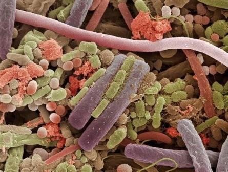 Бактерии, обитающие в ротовой полости, могут использоваться в качестве маркера рака поджелудочной железы