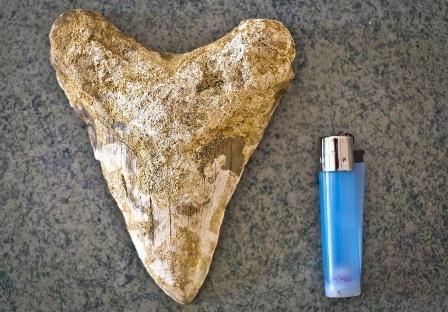 В Испанском городке нашли зуб древней акулы, жившей 6 миллионов лет назад